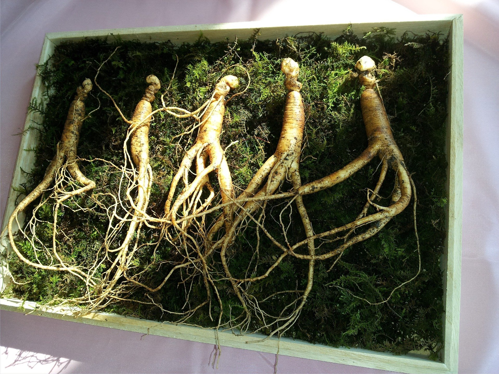 Korean red ginseng as herb supplement for adhd.